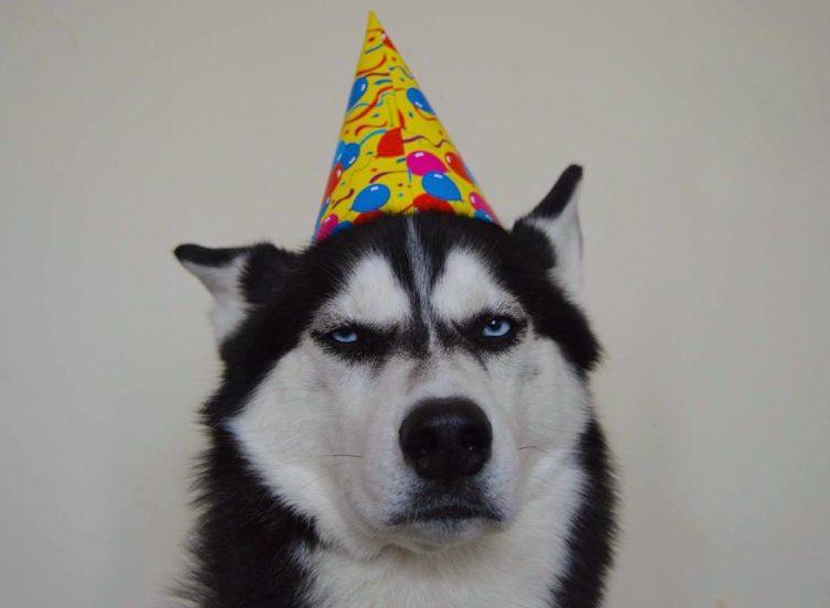 Grumpy Husky Celebrates 4th Birthday - KiSS RADiO